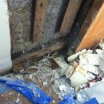 South Miami Water Damage Leads to Mold Damage