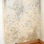 Mold in a Century City Home