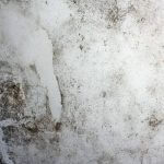 Beverly Hills Mold on Wall
