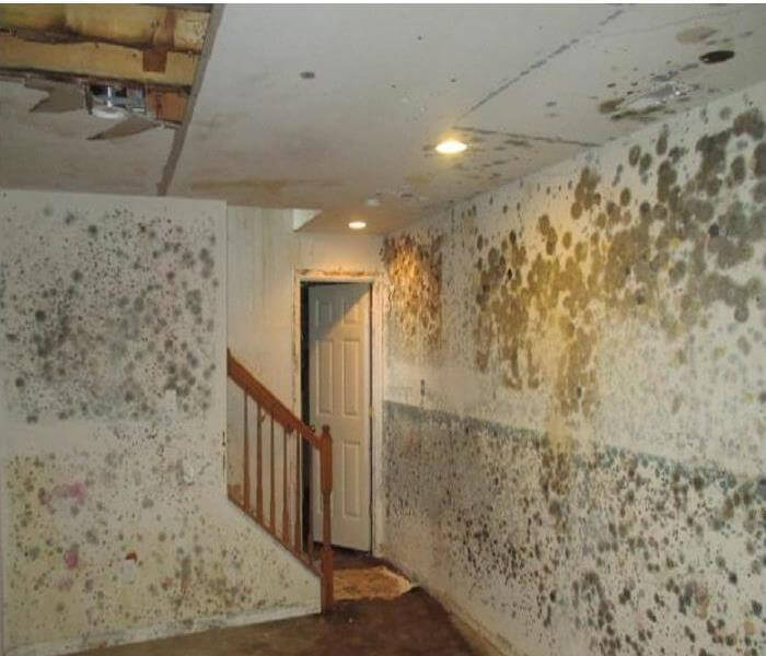 st petersburg fire water mold damage (2)