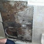 Mold damage at Estes Park Home