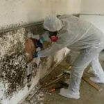 Mold Remediation Gear