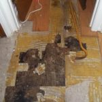 Mold Damage Remediation in San Antonio, TX