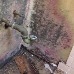 Walls Damaged By Mold