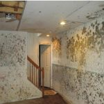 Mold Infestation in a Northeast St. Pete Condo